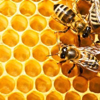 Méz és virágpor